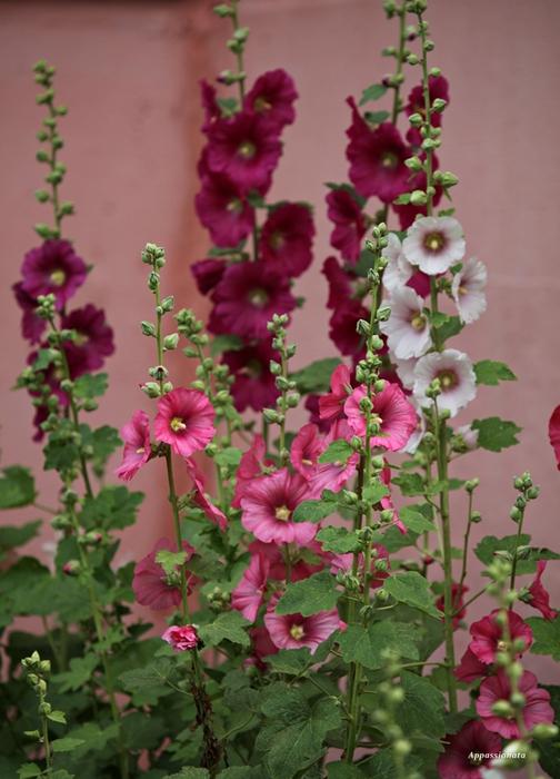Любовь стихотворение цветаевой