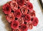 Превью роза (500x365, 52Kb)