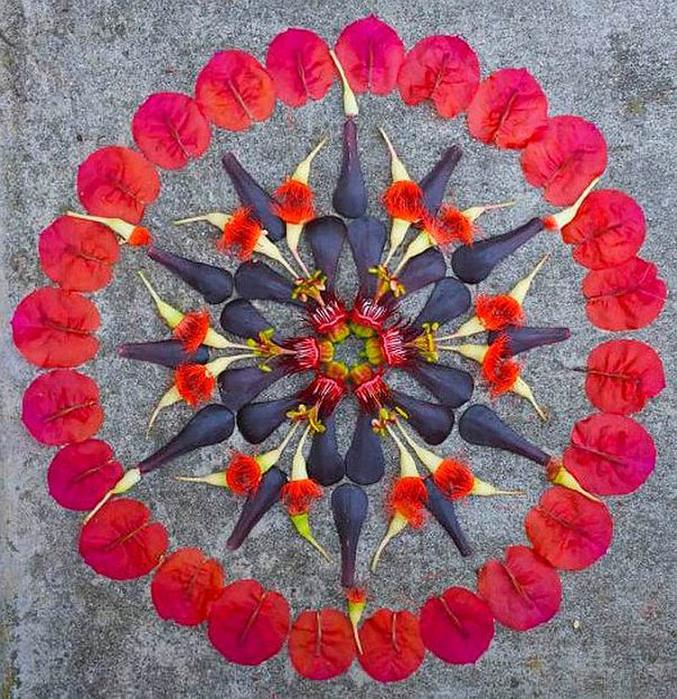 цветочные мандалы фото 24 (677x700, 240Kb)