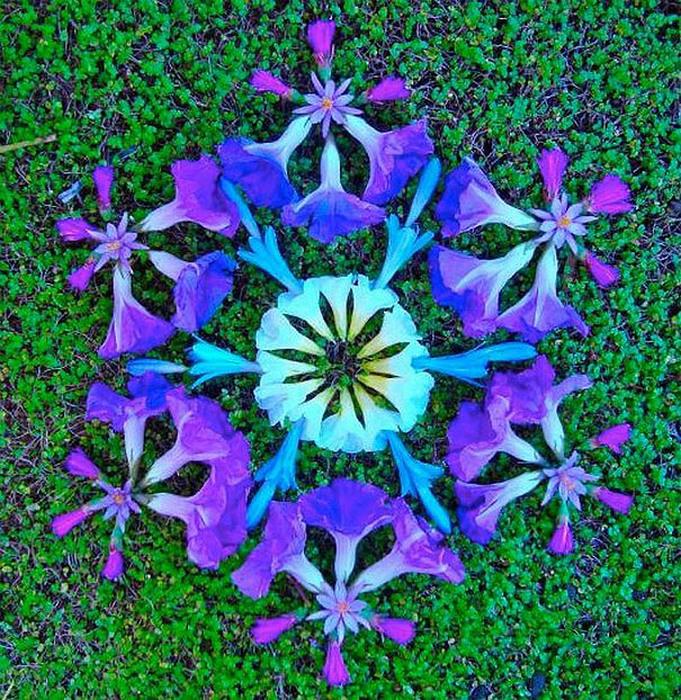 цветочные мандалы фото 36 (681x700, 312Kb)