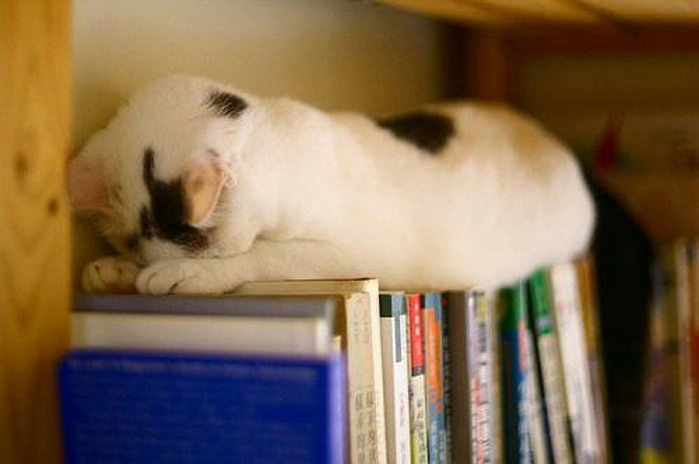коты спят (6) (700x464, 72Kb)