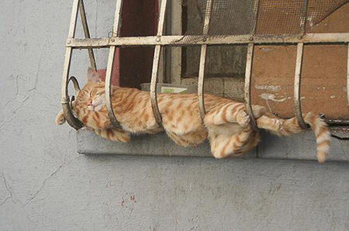 коты спят (7) (700x464, 103Kb)