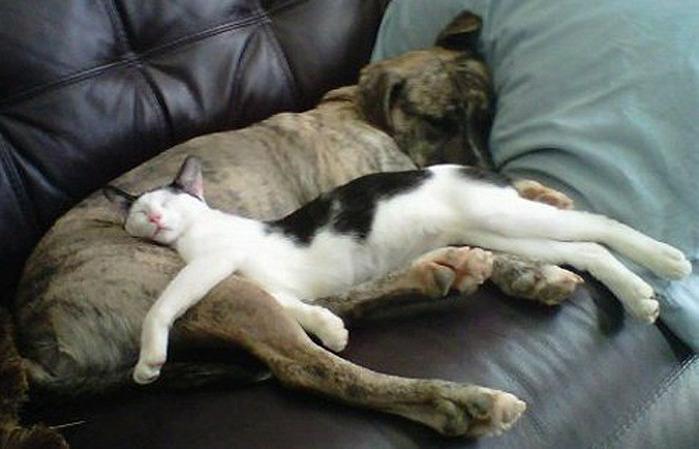 коты спят (16) (700x449, 86Kb)