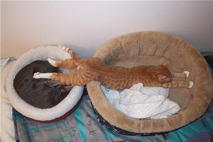 коты спят (20) (700x466, 97Kb)