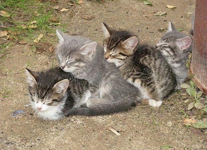 коты спят (24) (700x508, 166Kb)