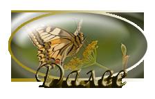 пеперуда3 (224x144, 41Kb)