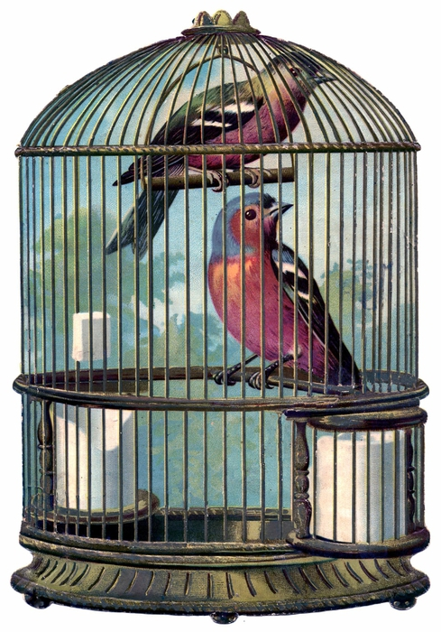 bird cage vintage image GraphicsFairy004sm (489x700, 296Kb)
