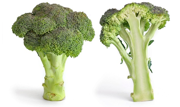 Broccoli_and_cross_section_edit (592x352, 68Kb)