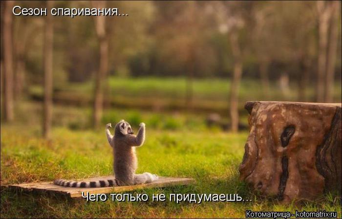 kotomatritsa_b (700x448, 43Kb)