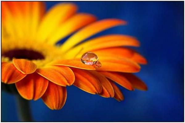 макро фотографии, красивое макро, макросъемка фотографии, красивые фото макро