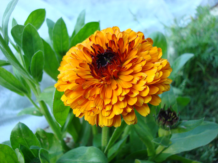 m_flower_24b (700x525, 84Kb)