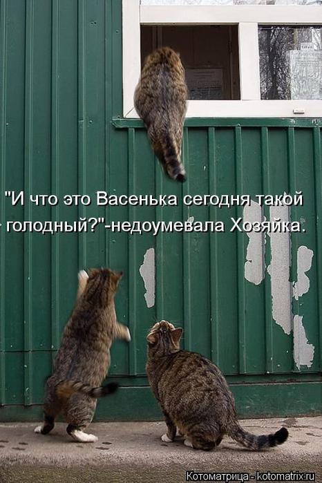 kotomatritsa_ra (466x700, 58Kb)