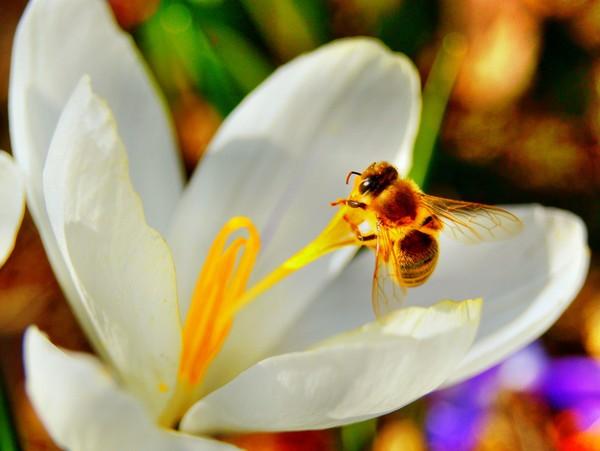 цветы1 (600x451, 49Kb)