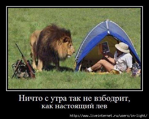 лев (485x387, 104Kb)