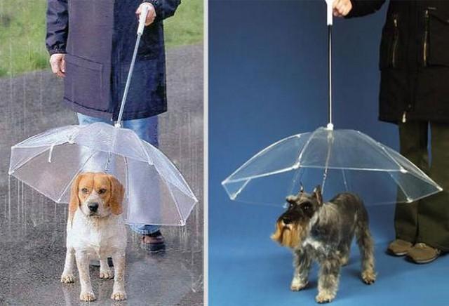 Красивые и необычные зонты 7 (640x436, 63Kb)