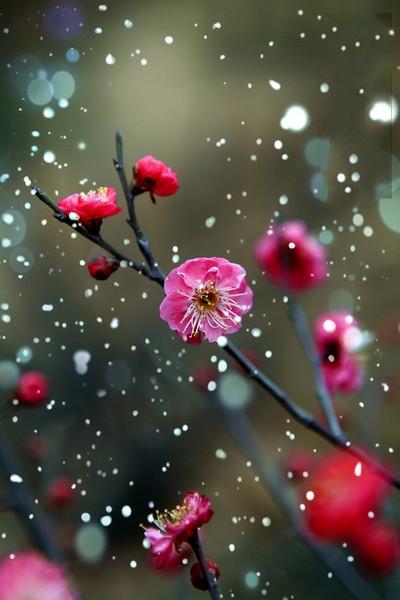 цветы1 (400x600, 141Kb)