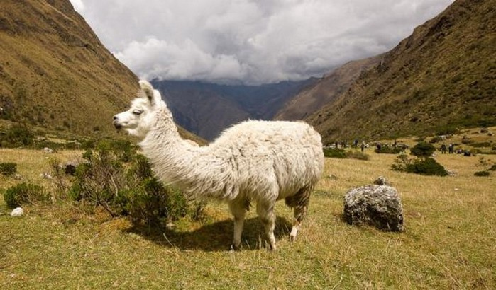 Как разнообразить путешествие по Латинской Америке 13 (700x410, 95Kb)