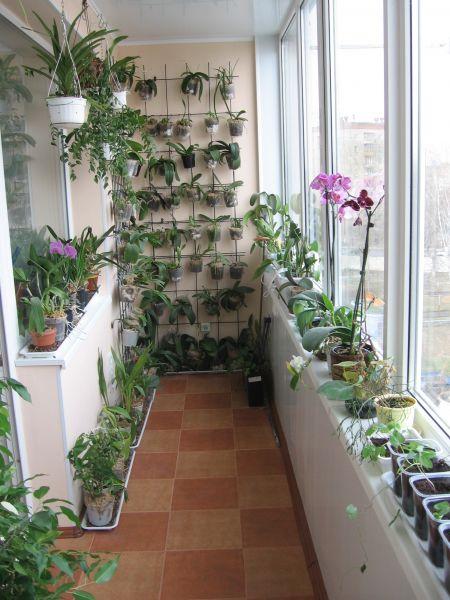 Зимний сад в лоджии фото