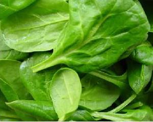 poleznie-svoystva-spinata (300x240, 14Kb)