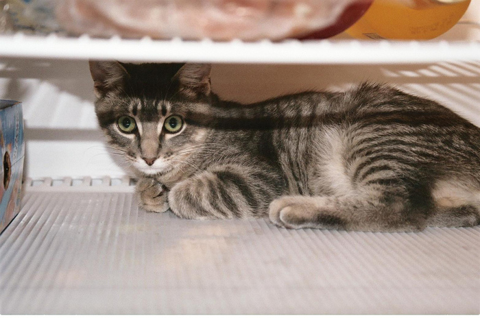 прикольные фото кошек 2 (700x464, 157Kb)