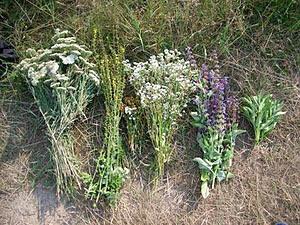 herbs-picking_b (300x225, 34Kb)