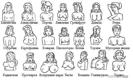 Какие типы бывают женские соски картинки фото 692-654