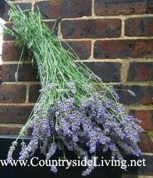 dry-flowers_lavender (215x250, 23Kb)