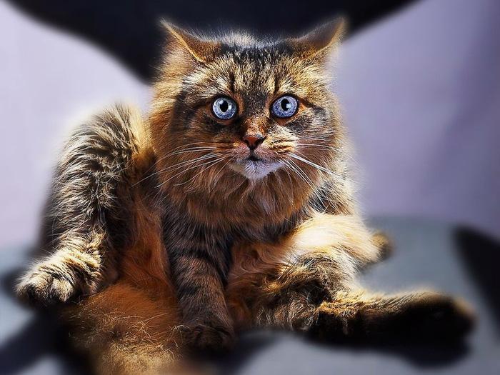 Почему Ваську-кота зовут Васькой...