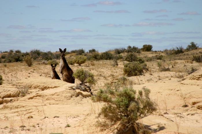 Национальный Парк Манго - Mungo National Park 23562