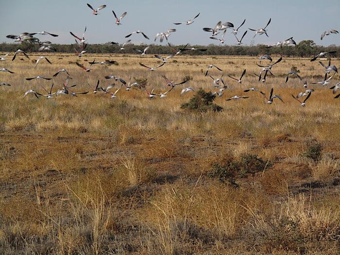 Национальный Парк Манго - Mungo National Park 27738