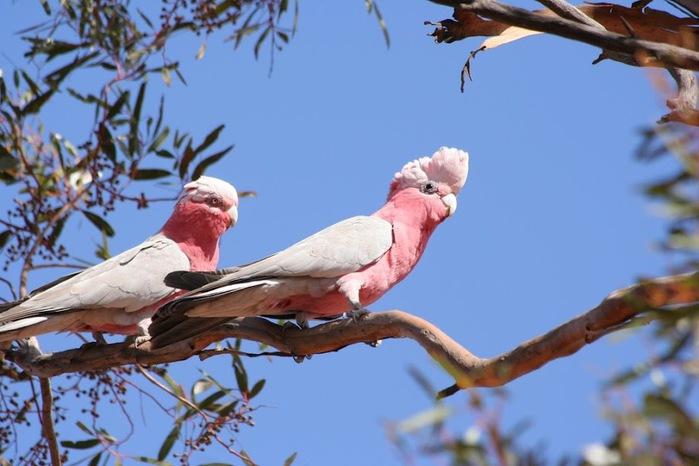 Национальный Парк Манго - Mungo National Park 90724