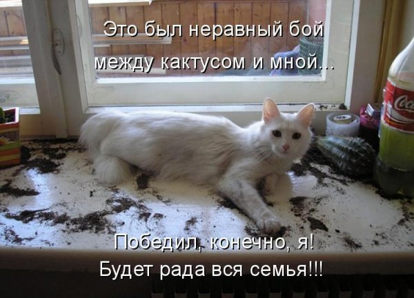 1246369701_jivotnie_7 (600x432, 57Kb)