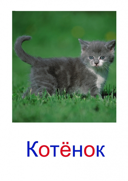 http://img1.liveinternet.ru/images/attach/c/5/88/994/88994163_large_4979214_1.jpg
