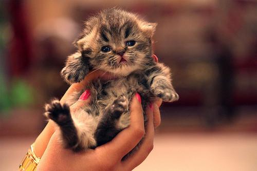 смешные котята фото 10 (500x333, 52Kb)