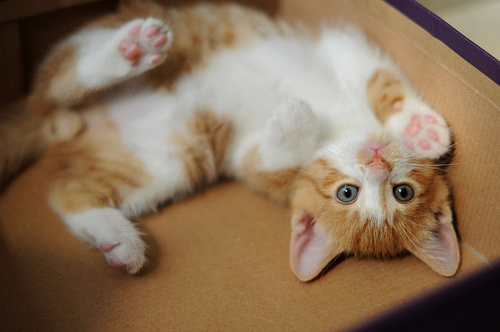 смешные котята фото 12 (500x332, 84Kb)