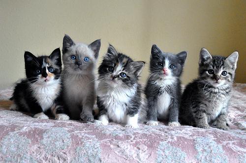 смешные котята фото 13 (500x332, 134Kb)