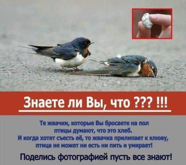 птицы-погибают_жвачка (604x536, 47Kb)