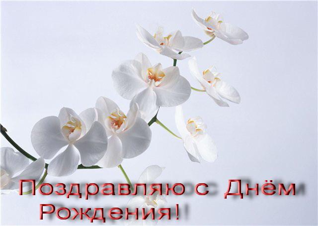 орхидея фото цветы с днём рожденья