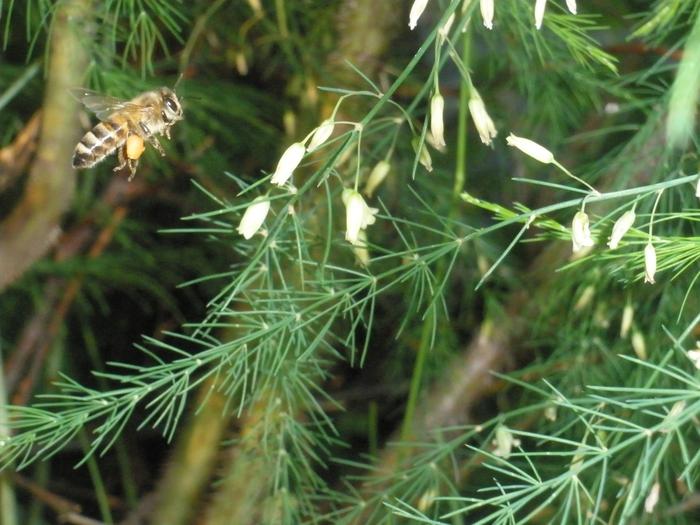 пчела/4668337_P6221141 (700x525, 279Kb)