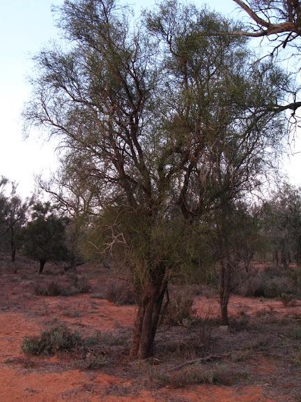 Национальный Парк Манго - Mungo National Park 65243
