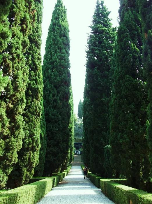 Сад Джусти - достопримечательности Италии 17 (522x700, 139Kb)