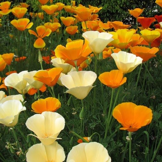 572850_flowers_pic (560x560, 125Kb)