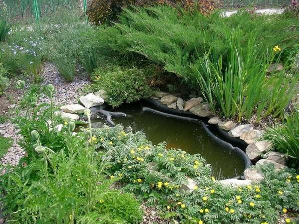 11 Декоративный пруд фото декоративных прудов и других элементов ландшафтного дизайна