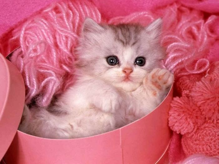 kitten-in-pink (700x525, 51Kb)