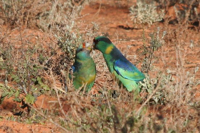 Национальный Парк Манго - Mungo National Park 56720