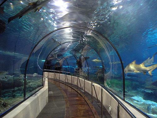 аквариум барселоны (500x375, 205Kb)