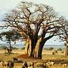 tree (100x100, 7Kb)