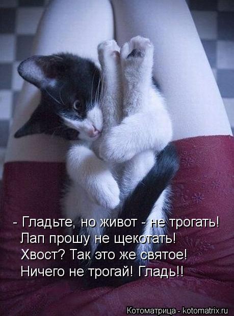 kotomatritsa_6o (459x618, 47Kb)