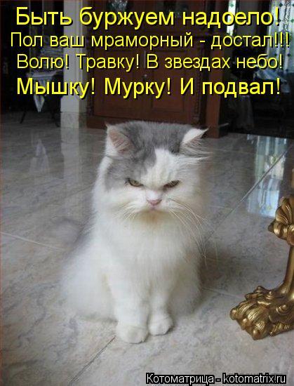 kotomatritsa_C (419x550, 48Kb)