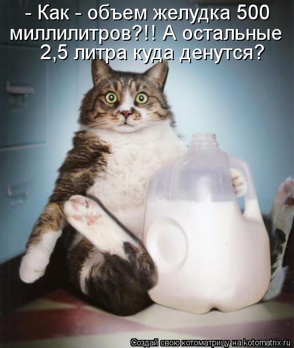 kotomatritsa_lA (577x683, 50Kb)